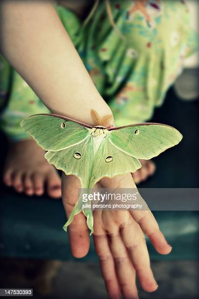 girl holding butterfly in hand - luna moth stock pictures, royalty-free photos & images