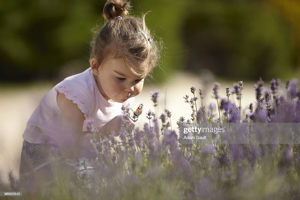 Girl holding butterfly in lavender field : Stock Photo
