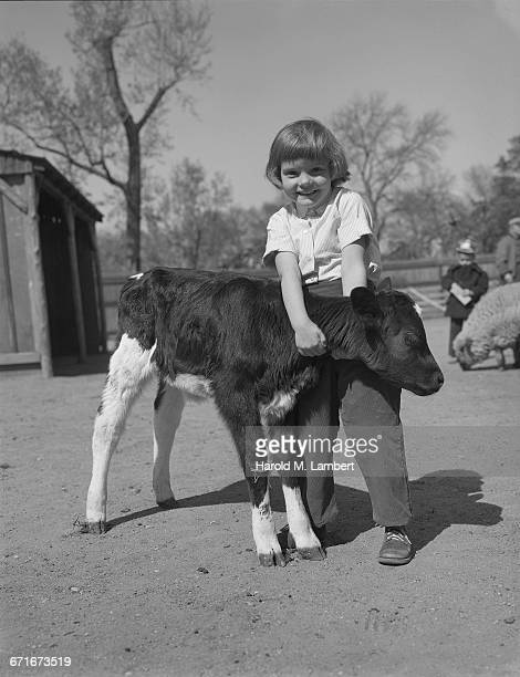 girl holding calf and smiling - {{relatedsearchurl(carousel.phrase)}} stock pictures, royalty-free photos & images