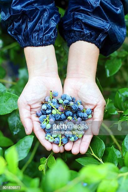 Girl holding fresh ripe blueberries