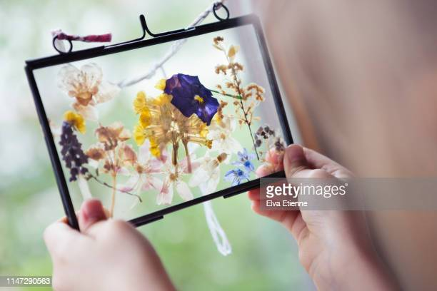 girl (6-7) holding glass frame filled with pressed flowers - dried plant stock pictures, royalty-free photos & images