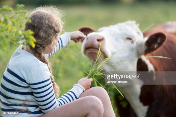 Girl holding grass for cow