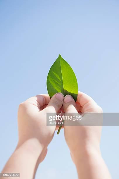 Girl (8-9) holding green leaf against blue sky