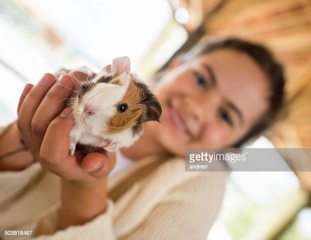 girl holding guinea pig - guinea pig stock pictures, royalty-free photos & images