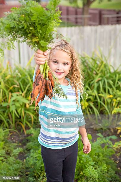 Girl Holding Handful Of Freshly Dug Organic Carrots in Garden