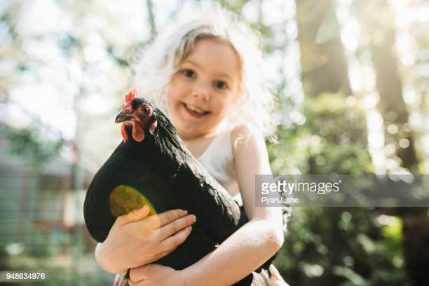 girl holding her pet chicken - livestock stock pictures, royalty-free photos & images