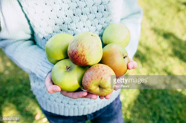 Girl holding homegrown apples in hands