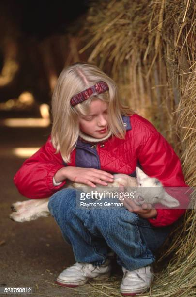girl holding lamb - bialowieza forest stock pictures, royalty-free photos & images