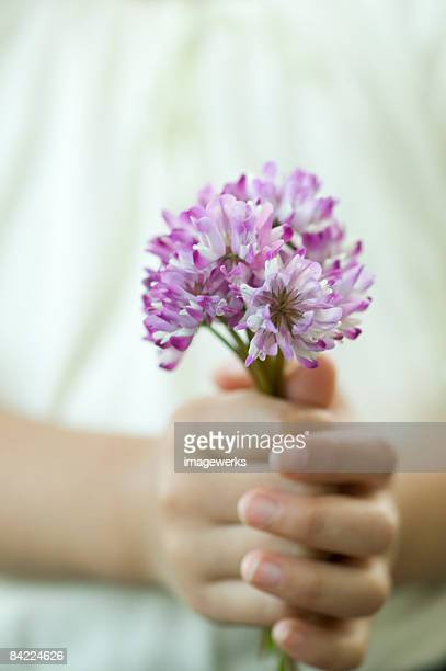 Girl (6-7) holding milk vetch flowers, mid section, close-up