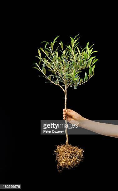 Girl holding olive tree against black