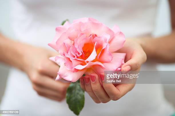 Girl Holding Pink Coral English Rose