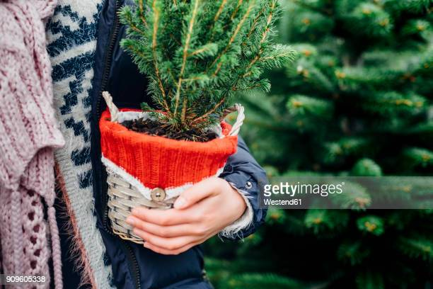 girl holding potted christmas tree, close up - blumentopf stock-fotos und bilder