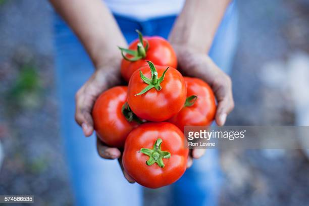 Girl holding tomatoes at an organic farm, close-up
