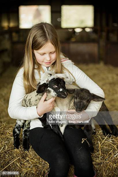 A girl holding two small lambs.