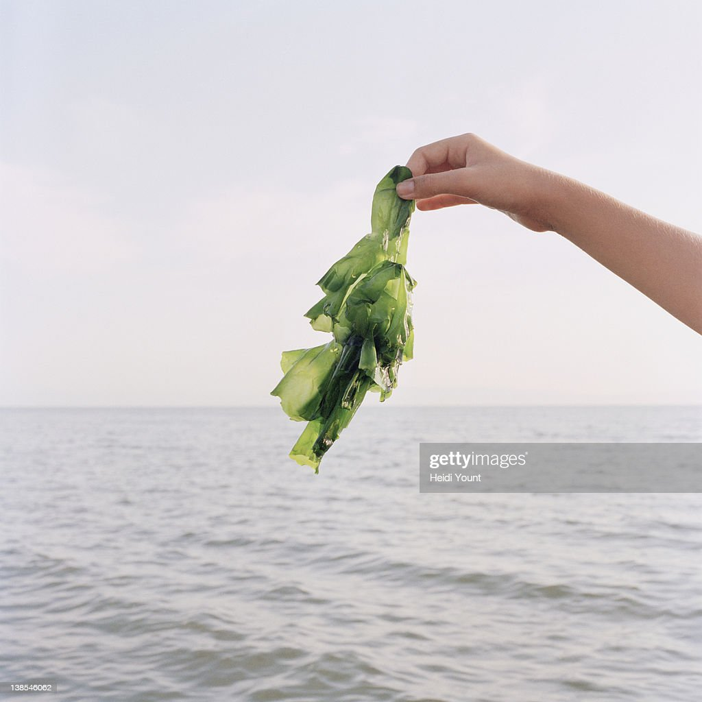 A girl holding up seaweed, focus on hand : Stock Photo