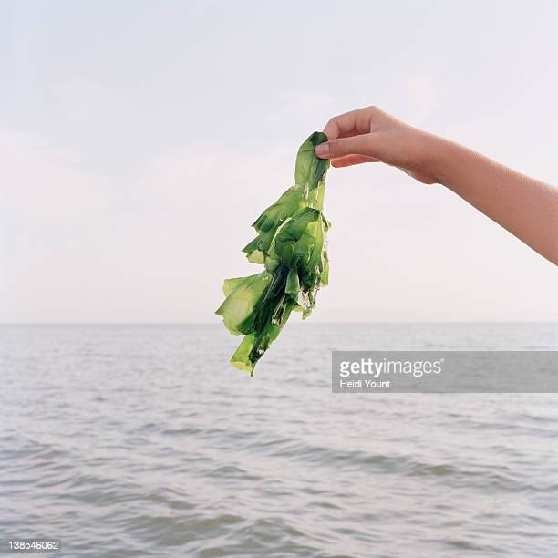 A girl holding up seaweed, focus on hand
