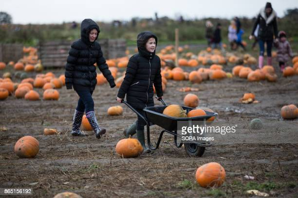 A girl holds a wheelbarrow with some Pumpkin on it with her family Pumpkin market is one of the exiting things locals can experience every year...