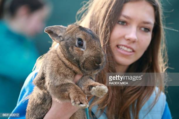 A girl holds her rabbit as she watches a rabbit track and field competition on the sidelines of a hunting exhibition in Kromeriz about 60 km east of...