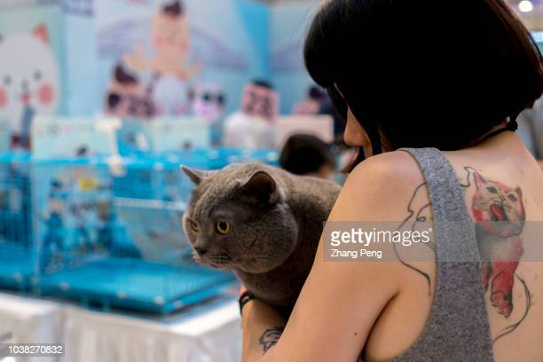 Girl hugs her British short-hair cat at a competition. A purebred cat awarding competition is held in a shopping mall. More and more Chinese young...