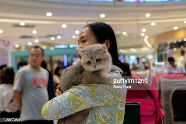 Girl hugs her cat at a competition. A purebred cat awarding competition is held in a shopping mall. More and more Chinese young people have their...