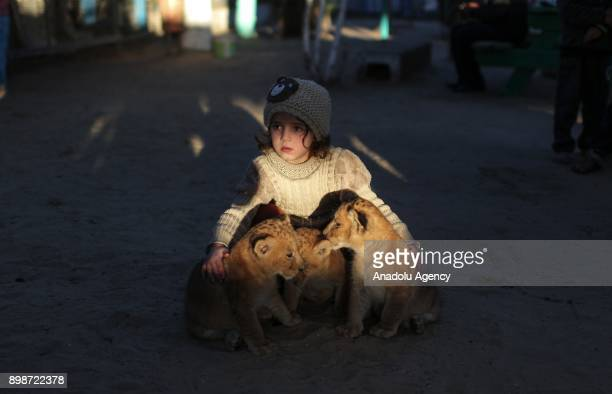 A girl hugs newly born triplet cubs at a zoo in Khan Younis district of Gaza City Gaza on December 26 2017 One of the cubs died short after a mother...