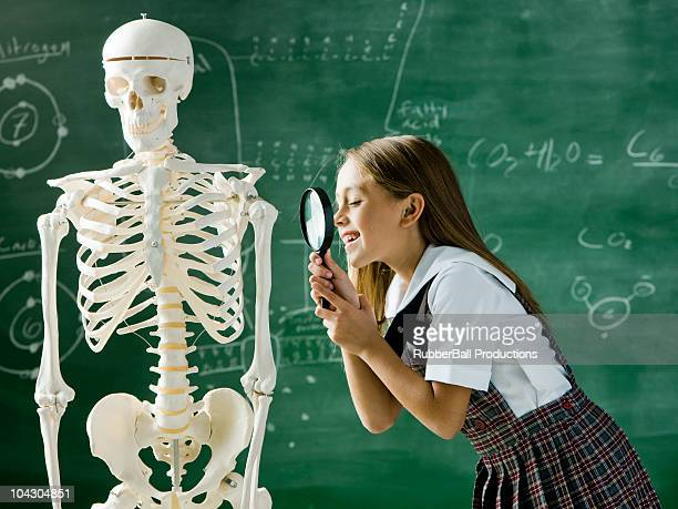girl in a classroom standing in front of a chalkboard examining a human skeleton with a magnifying glass - human skeleton stock pictures, royalty-free photos & images