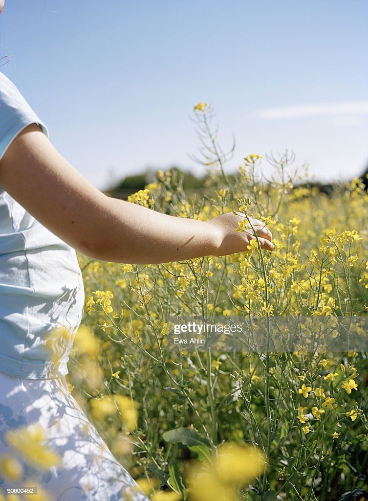 A girl in a field of flowering colza Sweden. : Stock Photo