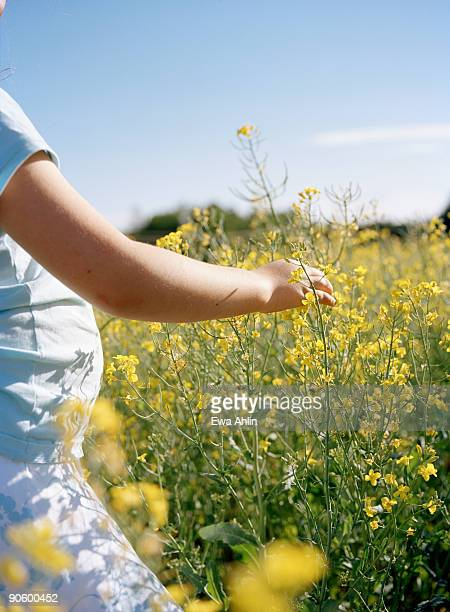 a girl in a field of flowering colza sweden. - fat belly girl stock photos and pictures