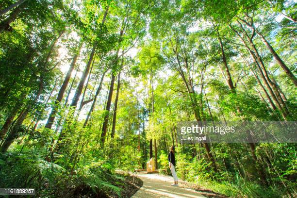 girl in a forest looking up - non urban scene stock pictures, royalty-free photos & images