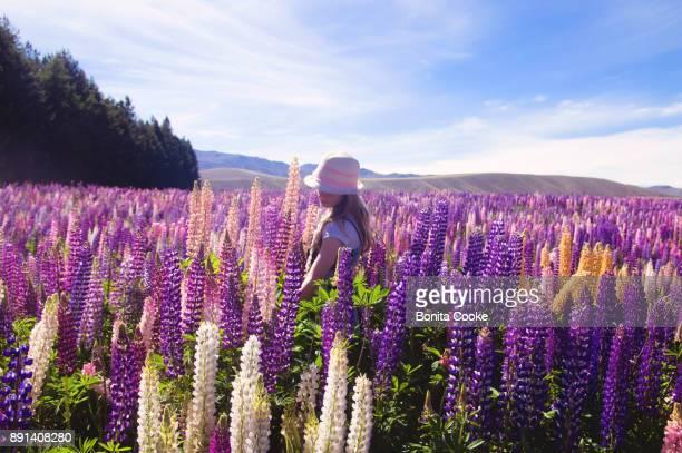 Girl in a lupin flower field in Spring, at Lake Tekapo