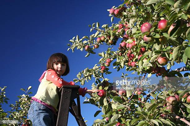 girl in an orchard - step ladder stock photos and pictures