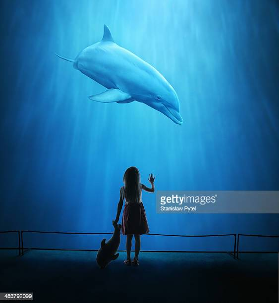 girl in aquarium looking at dolphin - one girl only stock pictures, royalty-free photos & images