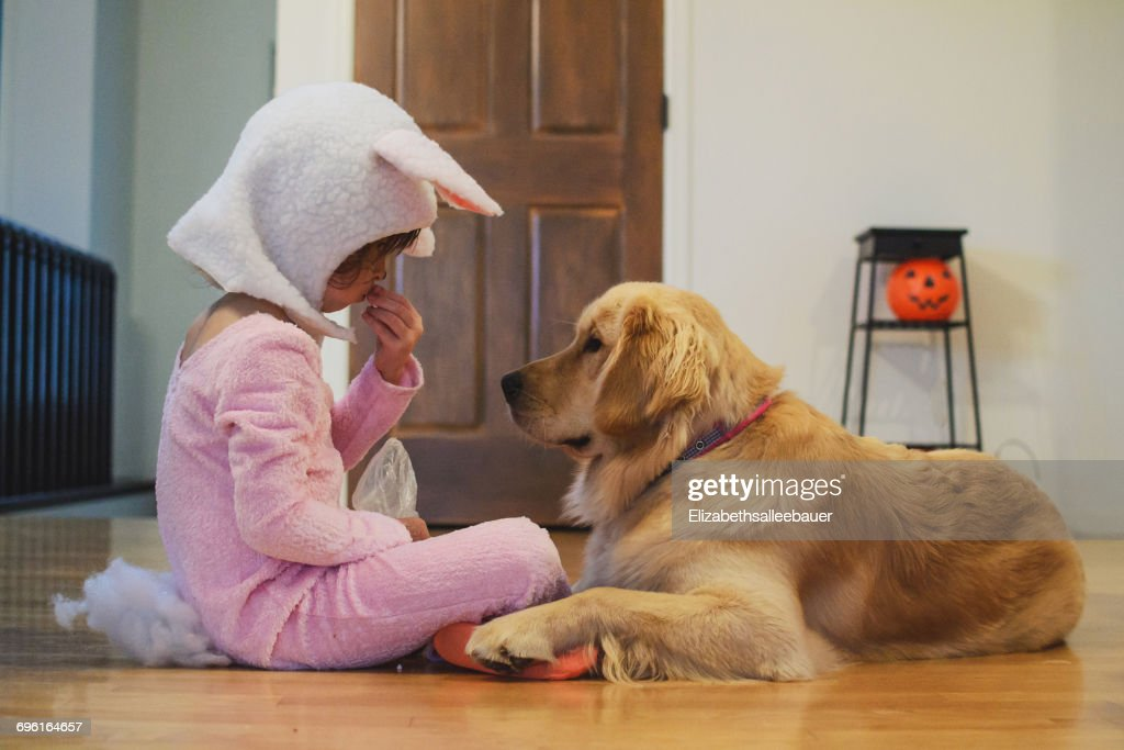 Girl in bunny costume sharing Halloween candy with Golden Retriever dog : Stock Photo