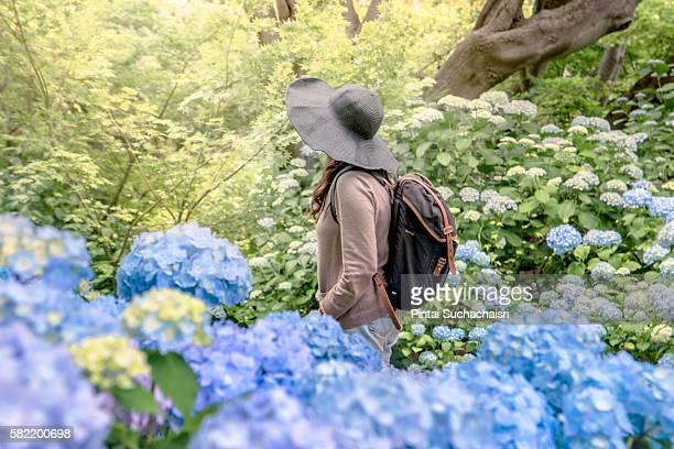 girl in hydrangea garden in christchurch, new zealand - christchurch nieuw zeeland stockfoto's en -beelden