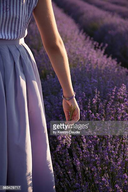 girl in lavender field, holding lavender - purple skirt stock pictures, royalty-free photos & images