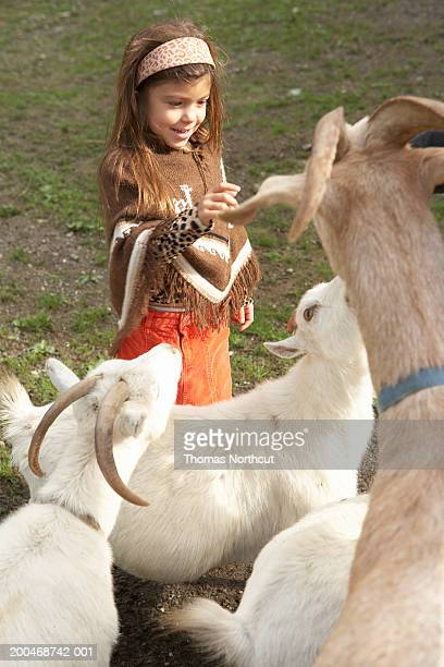 Girl (5-7) in pasture with pygmy goats and nubian goats, smiling
