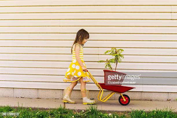 girl in polka dot dress pushing wheelbarrow with plant - wheelbarrow stock photos and pictures