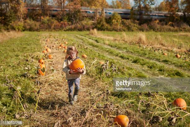 girl in pumpkin patch - heshphoto stock pictures, royalty-free photos & images