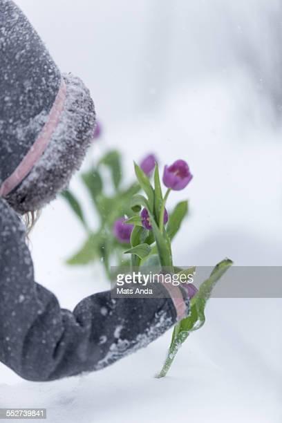 Girl in winter coat plcing flower in the snowstorm