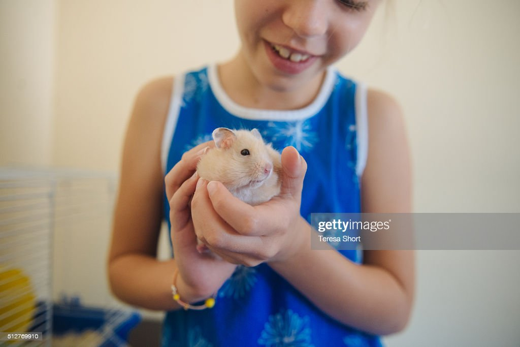 Girl is holding a pet hamster : Stock Photo