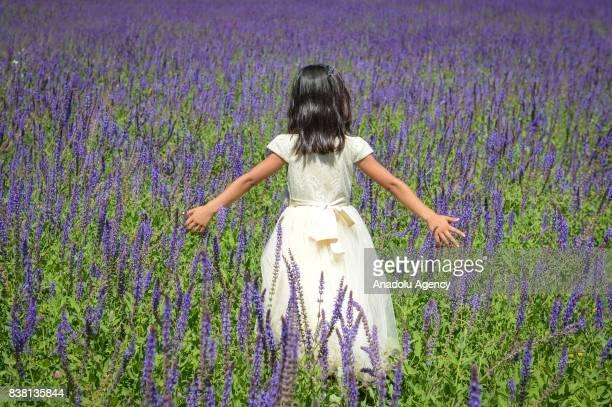 A girl is seen in purplish wild flower garden in Edremit district of Van Turkey on August 23 2017