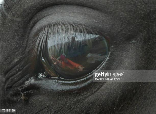 A girl is seen in the reflection of her horse's eye as she speaks to him during a contest where the best 25 Lipizzan horses from Romania compete to...