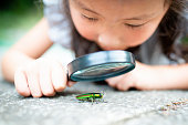 girl is watch a jewel beetle in the magnifying glass