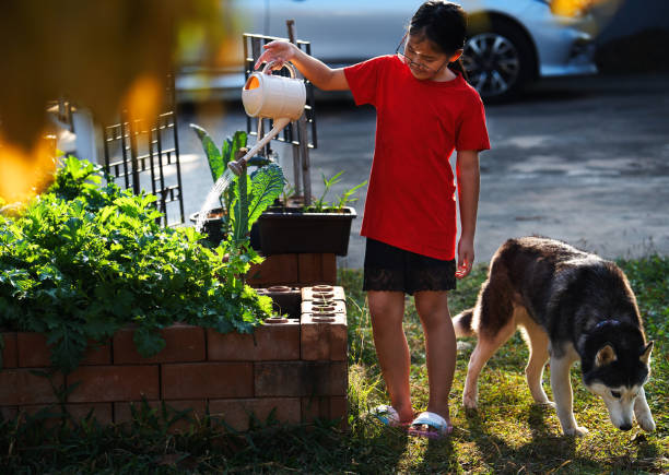 A girl is watering her homegrown vegetables in the yard