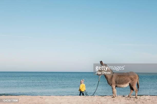 girl leading donkey on beach, wiendorf, mecklenburg-vorpommern, germany - einfaches leben stock-fotos und bilder