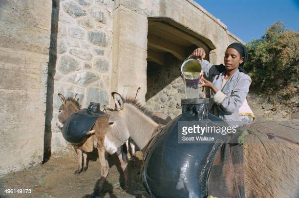 A girl loading water into rubber containers carried by donkeys in Eritrea 2004