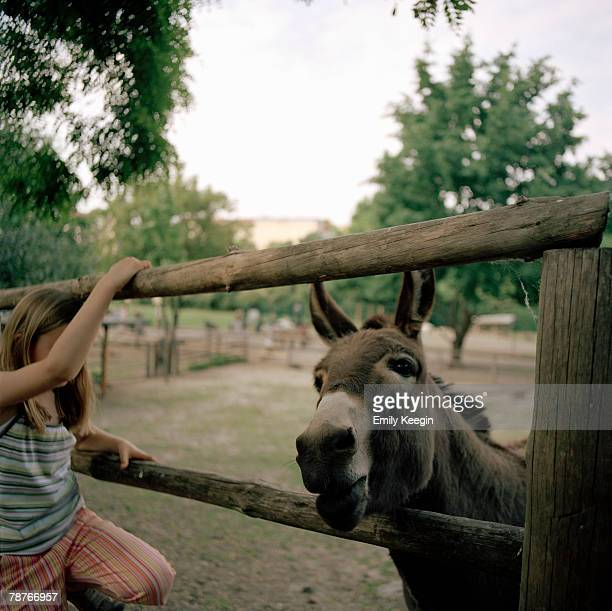 A girl looking at a donkey
