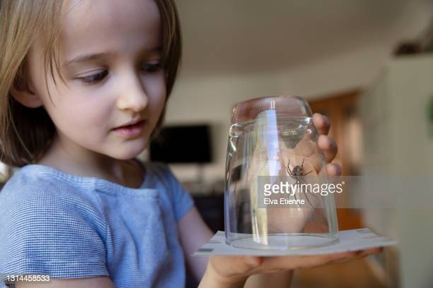 girl (8-9) looking at a large house spider trapped inside a drinking glass in a living room - spider fotografías e imágenes de stock