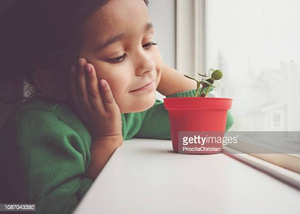girl looking at a plant growing on her window sill - children only stock pictures, royalty-free photos & images