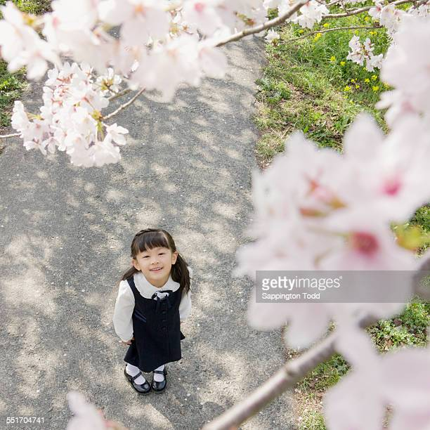 Girl Looking At Cherry Blossom Tree
